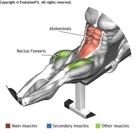 bench leg pull in 1000 ideas about banc de musculation on pinterest barre