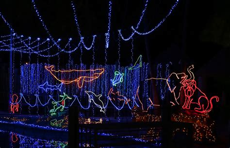 zoo lights tickets tis the season for zoo lights park zoo