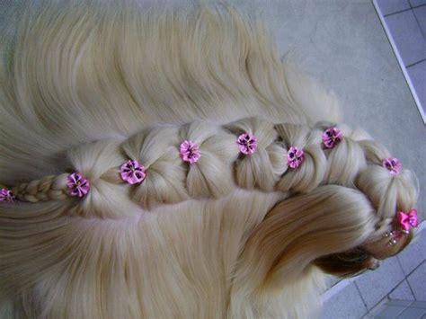 shih tzu braids rapunzel beautiful and dr who on