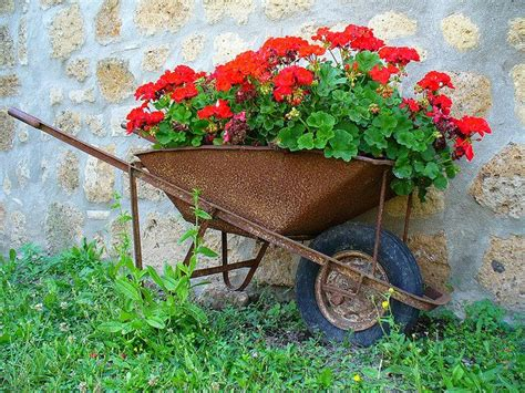 Wheelbarrow Planter by Wheelbarrow Planter Pots Woodworking Projects Plans