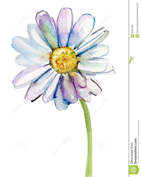 watercolor daisy tattoo 25 best ideas about watercolor on