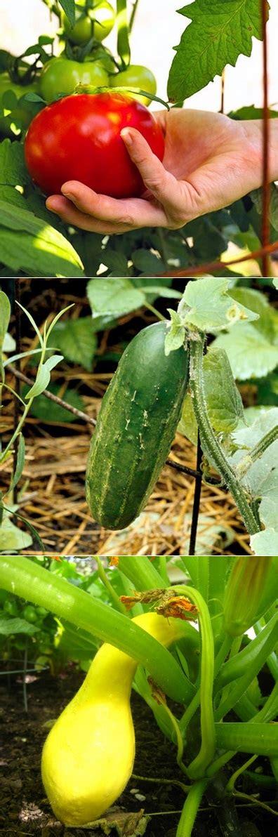 the backyard garden plants that help other plants grow