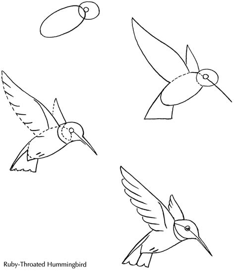 imgs for gt hummingbird flying drawing
