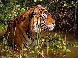 tiger biography in english wildlife wikipedia
