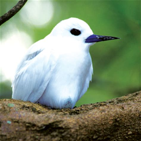 can you spot these 5 hawaii birds in town honolulu