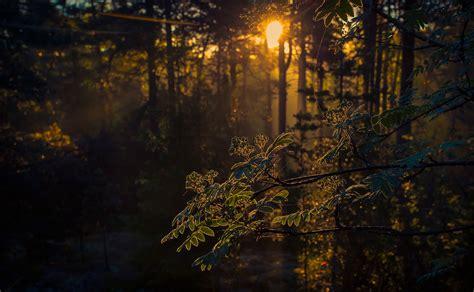 wallpaper coklat gelap wallpaper gelap alam pohon sinar matahari 2000x1235