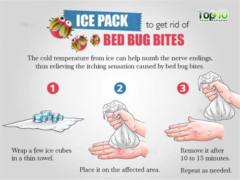 do bed bugs like the cold how to get rid of bed bug bites top 10 home remedies