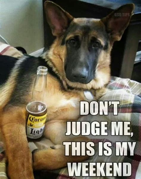 German Memes - cool weekend germanshepherd dog gsd pinterest beer