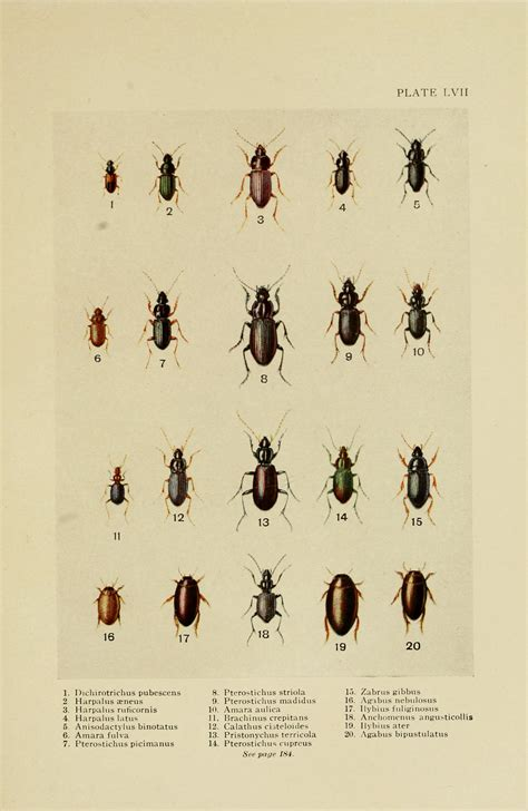 Image Gallery Tiny Beetles Tiny House Beetles