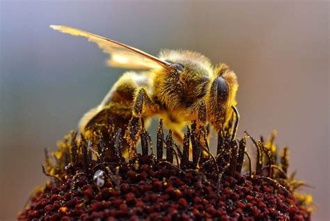 68 garden pesticides to avoid in order to help the bees