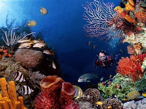 Ikan Bawah Laut 9 7 taman laut terindah di indonesia blitarvaganza