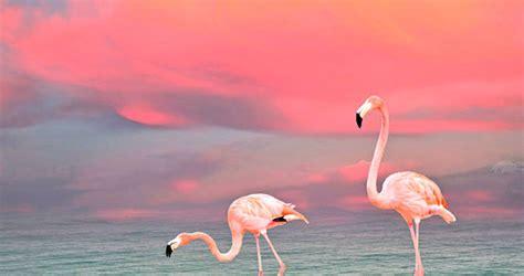 flamingo wallpaper nyc pink flamingos making a heart