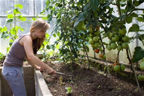Tomaten Gewächshaus Selber Bauen Anleitung by Tomatenhaus Selber Bauen Bauanleitung