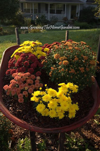 Lowes Giveaway - more mums and the 50 lowe s giveaway ends today growing the home garden