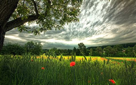 germany landscape poppies wheat field clouds red
