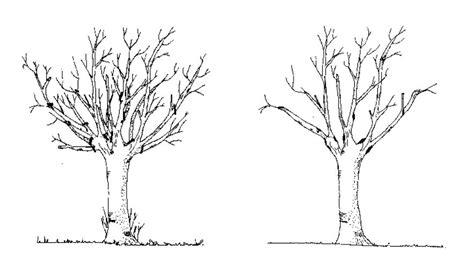 potatura a vaso come potare gli alberi alberosano