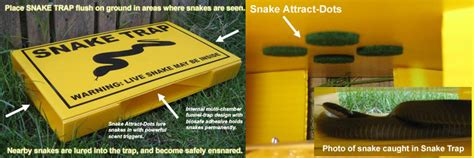 how to get snake out of house how to keep snakes out of your yard