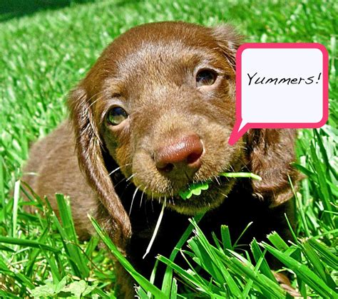 what can dogs eat interesting facts vetlive