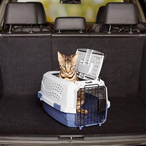 compagnie aeree accettano cani in cabina gatto in aereo come viaggiare senza traumi miciogatto it