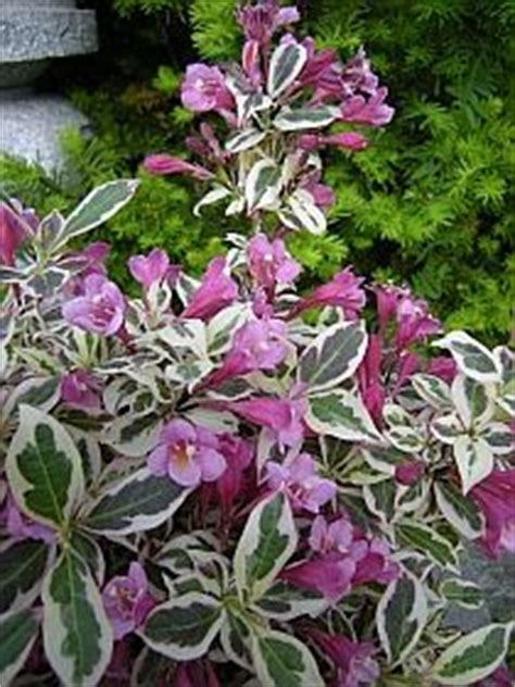 flowering shrubs for zone 9 zone 9 flowers on perennials florida and plants