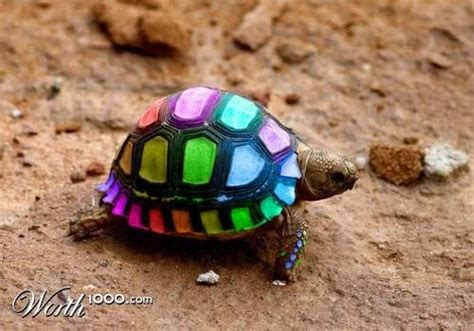 what color are the turtles never paint your tortoise there shells need to breath and