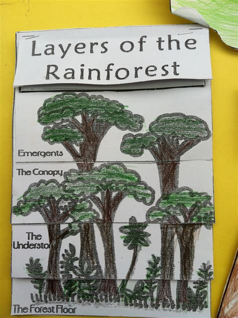 the of the forest books 4 layers of the rainforest for