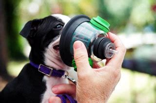 can dogs get asthma asthma allergies for all the answers at has allergies