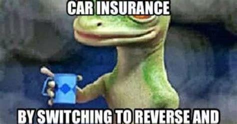 Car Insurance Meme - geico gecko quot just saved a ton of money on car insurance by