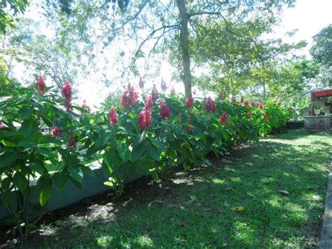 Caguas Botanical Garden El Jard 237 N Bot 225 Nico Y Cultural William Miranda Picture Of Caguas Botanical Garden William