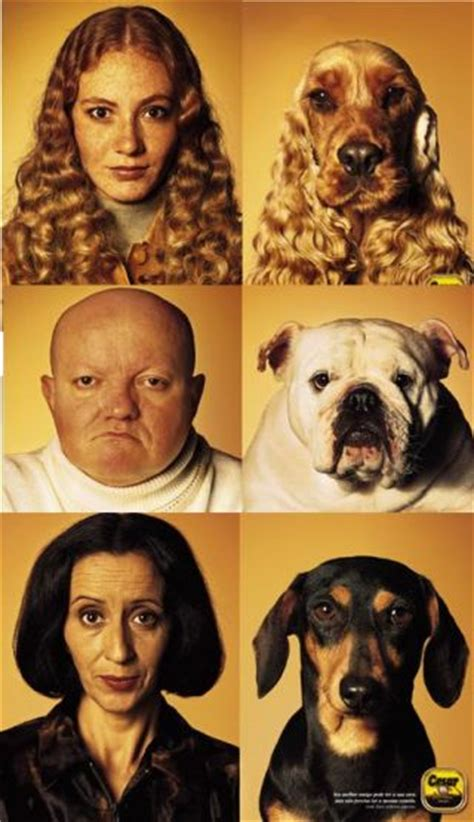 where do dogs like to be pet do dogs look like their owners psychology today