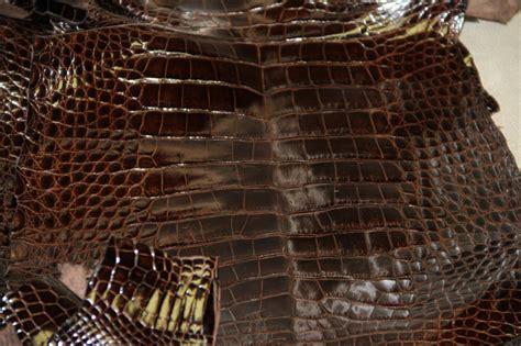 Alligator Skin by Alligator Leather Wholesale Alligator Skins For