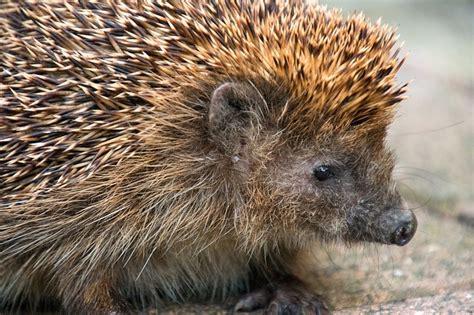 Imagenes De Animales Que Hibernan | 191 qu 233 es la hibernaci 243 n 191 qu 233 animales hibernan