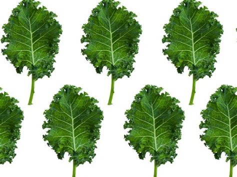 5 vegetables adults avoid healthiest vegetables 10 options for healthy green