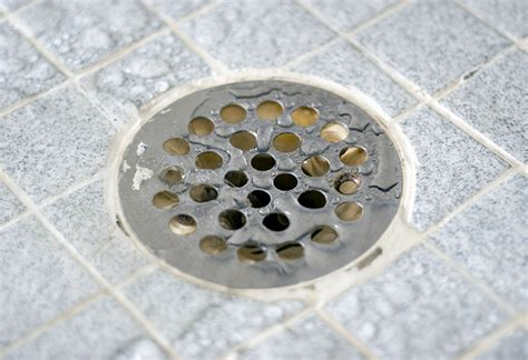 mosquitoes in bathroom drains how to unclog shower drains at the home depot