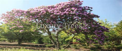 Nat Rlicher Sichtschutz F R Den Garten 9 by Sichtschutz Aus Pflanzen F 252 R Garten Terrasse 187 Luxurytrees 174