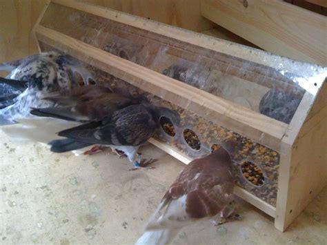 nice pigeon plexiglass feeder idea pigeon loft pigeon