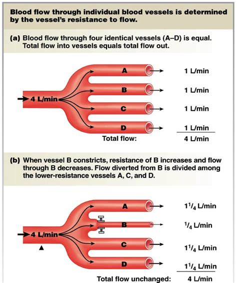 resistance in parallel blood flow chapter 15 blood flow and the of blood pressure at king s college studyblue