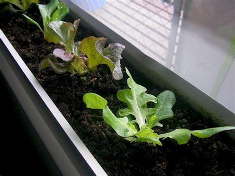 gardening winter vegetables grow vegetables indoors winter