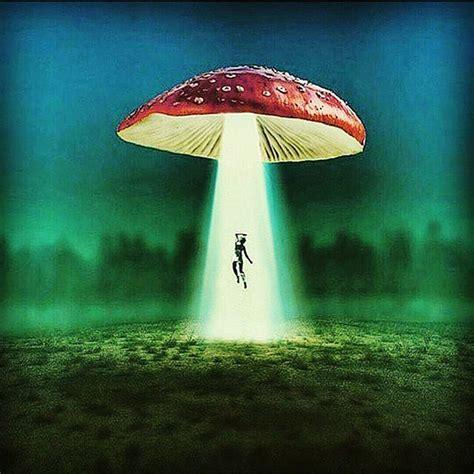 trippy mushroom art psychedelic on instagram