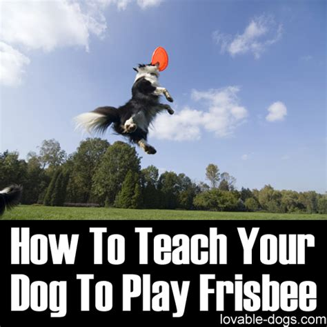 how to a to play frisbee lovable dogs how to teach your to play frisbee lovable dogs