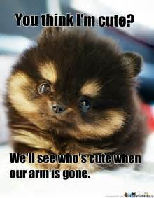 Cutest Memes - aggressively cute puppy by recyclebin meme center