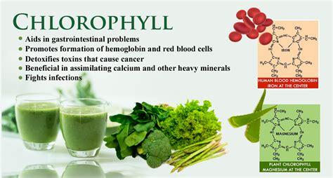 Chlorophyll Detox by Food 174 Alkalizer Detoxifier Dr Jockers Store