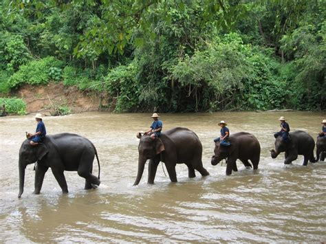 Chiang Dao Elephant Training in Chiang Mai - Activity in ...