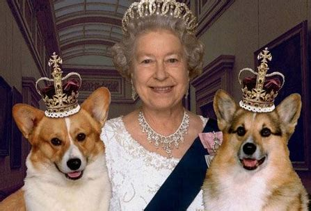 queen elizabeth ii corgis who are the queen s corgis read our blog to learn more