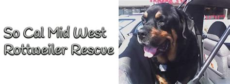 real rottweiler rescue so cal mid west rottweiler rescue home