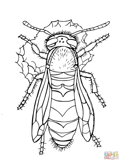 western yellow jacket coloring page free printable