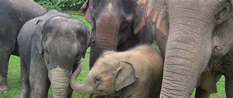 10 of the best animal sanctuaries to visit around the ...