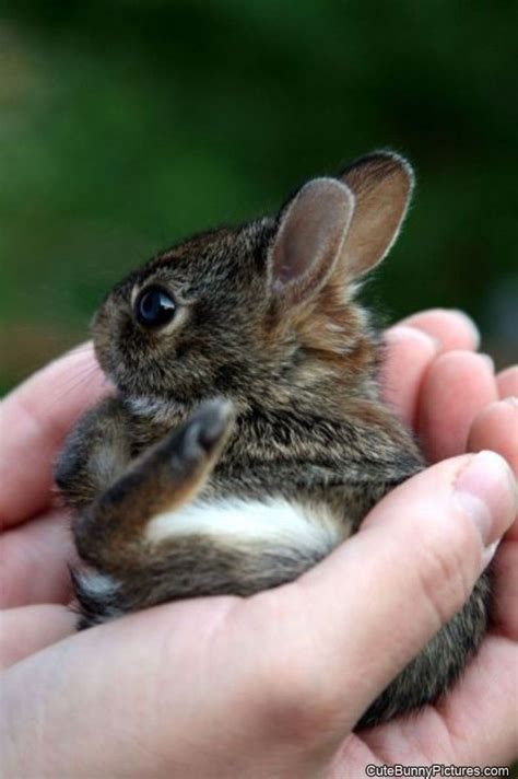 tiny small tiny little bunny cute bunny pictures