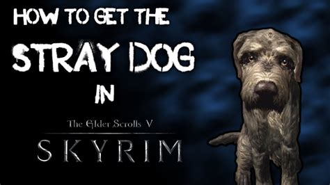 skyrim stray how to find the stray in skyrim