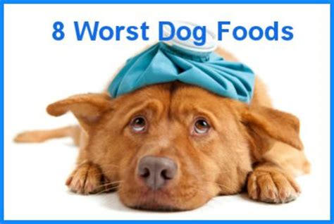 worst puppy food the 8 worst foods you can feed your paperblog